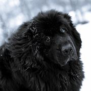 terranova cane prezzo