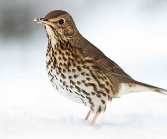 Uccelli autoctoni
