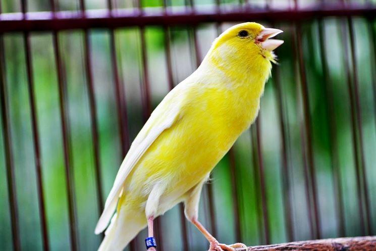 cinguettio uccelli da