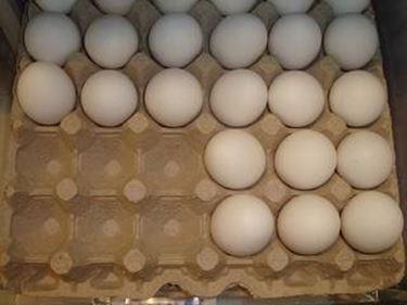 allevamento galline biologiche