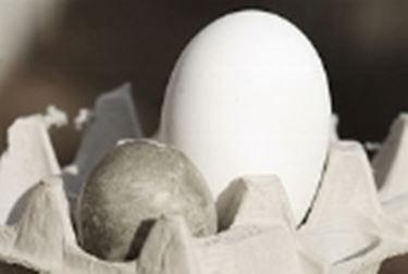 Oca uova