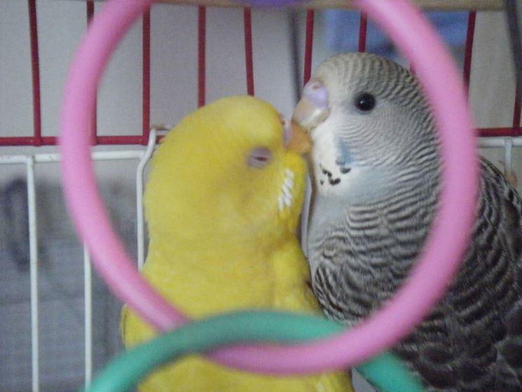 Disegni di nidi artificiali