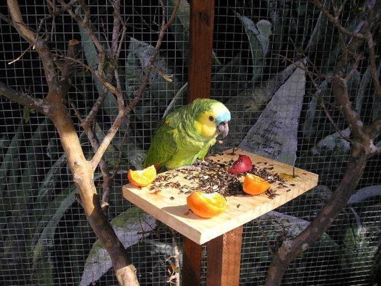 Gabbia pappagalli