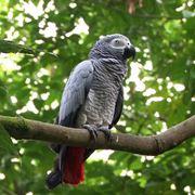 pappagallo parlante prezzo