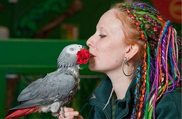 Il pappagallo e l'uomo