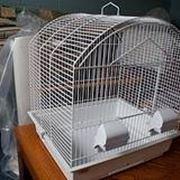 gabbie uccelli