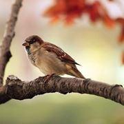 uccelli selvatici