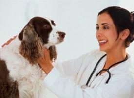 Le vaccinazioni nel cucciolo di cane