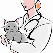 foto vaccino gatto