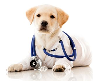 veterinario cani