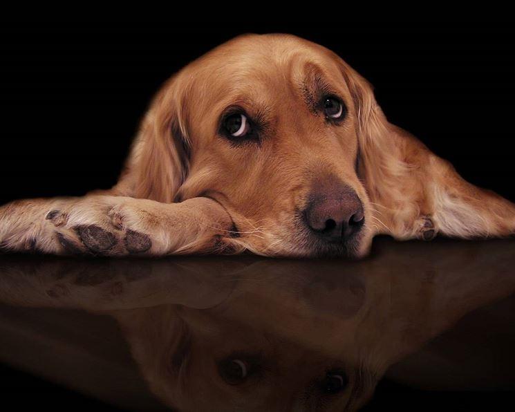 cane malattie