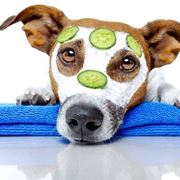 cane cura