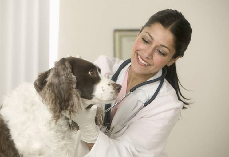 Visita cane dal veterinario
