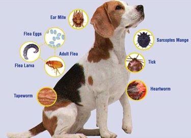 parassiti cani