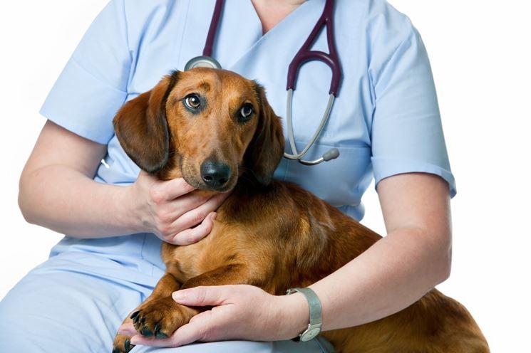 malattie cane