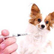 vaccino rabbia