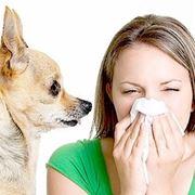 allergia cani