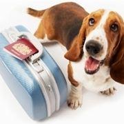 veterinario cani