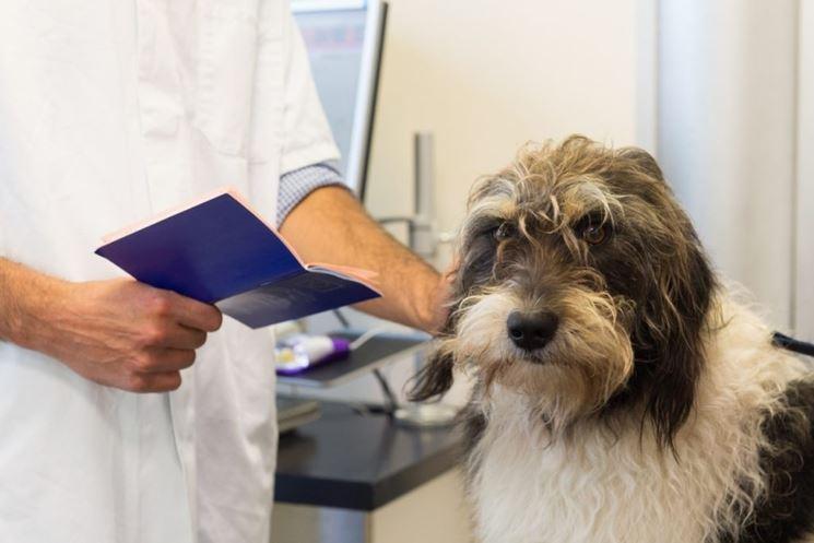 passaporto cane