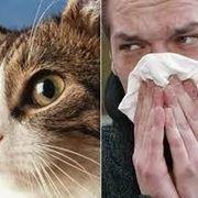 allergie gatto