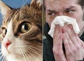 allergia da gatto