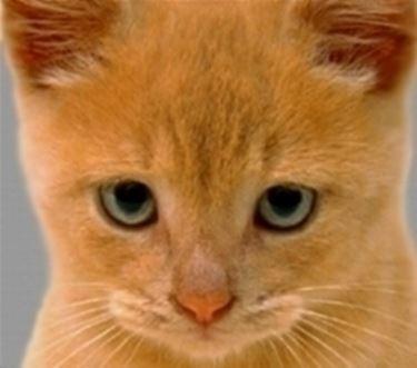 gatti nomi