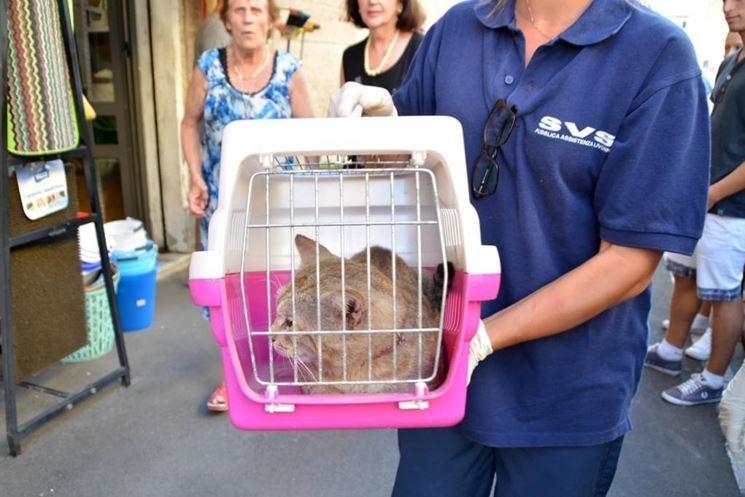 Gatto portato dal veterinario