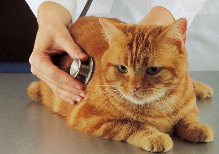 Gatto in cura dal veterinario