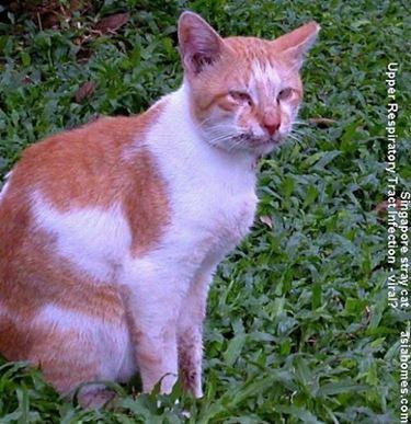 patologie gatti