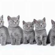 veterinario gatto