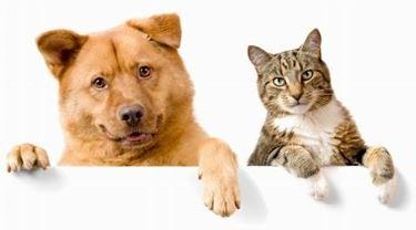 Veterinari gatti
