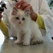 veterinario gatto